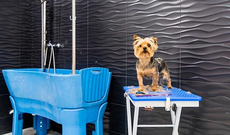 Servicios para mascotas